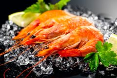 Shrimps. Fresh prawns on a black background. Seafood on crashed ice with herbs. Healthy food Royalty Free Stock Photography