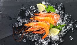 Shrimps. Fresh prawns on a black background. Seafood on crashed ice with herbs. Healthy food royalty free stock photo
