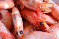 Shrimps. Good  orange seafood Royalty Free Stock Photo