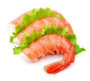 Shrimps with green salad Stock Photos
