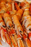 Shrimps On Ice. Shrimps in La Boqueria market in Barcelona Stock Image