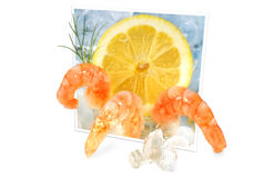 Shrimps on ice Stock Image