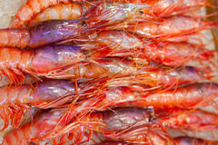 Shrimps on ice Stock Photography