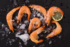 Shrimps on ice on black background. Stock Images