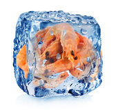Shrimps in ice cube Royalty Free Stock Images