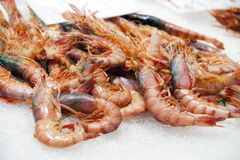 Shrimps in ice Stock Photo