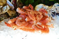 Shrimps in ice. Shrimps served in ice next to other seafood, as a beautiful dinner Royalty Free Stock Image