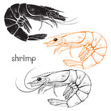 Shrimps, isolated elements for design on a white background. Vec Stock Photo