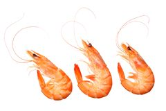 Shrimps isolated on a white background. top view stock image