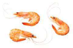 shrimps isolated on a white background. top view stock photography