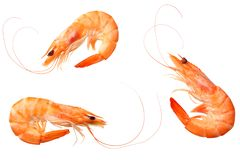 Shrimps isolated on a white background. top view royalty free stock photo
