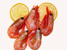 Shrimps & lemon Stock Image