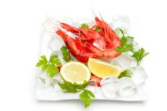 Shrimps with lemon and ice Stock Images