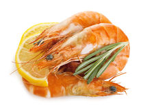 Shrimps with lemon slice and rosemary. Stock Images