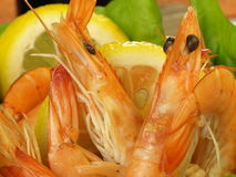 Shrimps with lemon slices, closeup Royalty Free Stock Photos