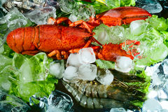 Shrimps and lobster royalty free stock images