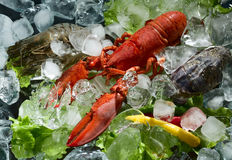 Shrimps and lobster Royalty Free Stock Photos