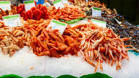 Shrimps in the market of la boqueria. Tasty shrimps in the market of la boqueria stock image