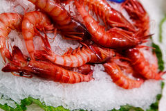 Shrimps in marketplace Stock Images