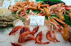 Shrimps from the Mediterranean. Shrimps cooled on ice on food market Stock Images