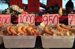 Shrimps, oysters and other seafood on the street market, Phuket island Royalty Free Stock Image