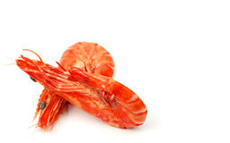Shrimps pair 3 Stock Images