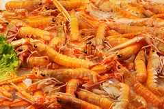 Shrimps pile Royalty Free Stock Photos