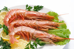 Shrimps in the plate Stock Images