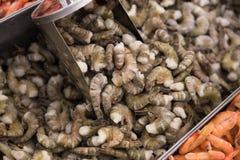 Shrimps raw Stock Photography