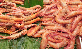 Shrimps ready to be grilled Royalty Free Stock Image