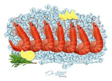 Shrimps with rosemary and lemon on ice cubes. Vector illustrationin cartoon style. Seafood product design. Inhabitant. Shrimps with rosemary and lemon on ice Stock Images