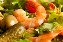 Shrimps salad Royalty Free Stock Images