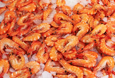 Shrimps for sale Stock Image