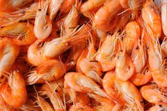 Shrimps. A sample of Mediterranean cuisine represented by some boiled shrimps stock image
