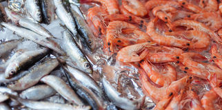 Shrimps and sardines Stock Photo