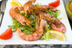 Shrimp on bed of lettuce. Seafood dish with shrimp, lettuce, and wedges of lemon and tomato, on a square white plate Stock Photography