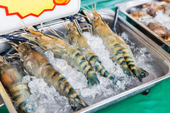 Shrimps or seafood on ice at asian street market Royalty Free Stock Image