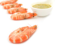 Shrimps with Seafood Sauce Stock Image