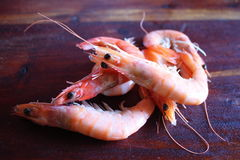 Shrimps. Seafood on the table Stock Image