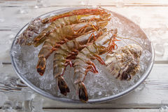 Shrimps with seashells on ice. Stock Photography