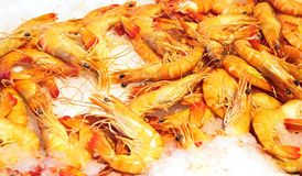 Shrimps, shellfish Stock Photos