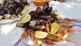 Shrimps and shellfish Royalty Free Stock Image
