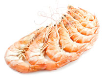 Shrimps with shells Stock Photography