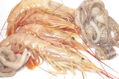 Shrimps and squid Stock Images