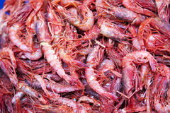 Shrimps for Sale Royalty Free Stock Photography