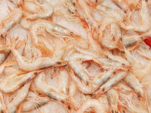 Shrimps on a stand in a spanish market. Shrimps on a stand in a fish supermarket Stock Photos