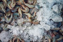 Shrimps on the street market. Closeup of a lot of fresh shrimps with ice on the street market. Bangkok, Thailand Stock Photography