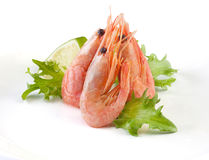 Shrimps Royalty Free Stock Images