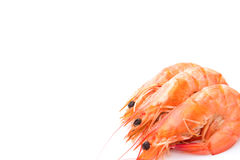 Shrimps on white background with copy space Stock Photo