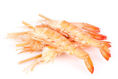 Shrimps on white background. Shrimps isolated on white background Royalty Free Stock Photo